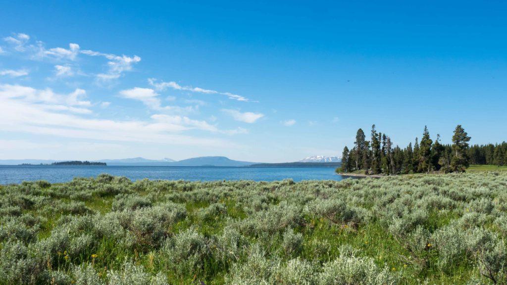 Au bord du lac Yellowstone (Yellowstone NP)