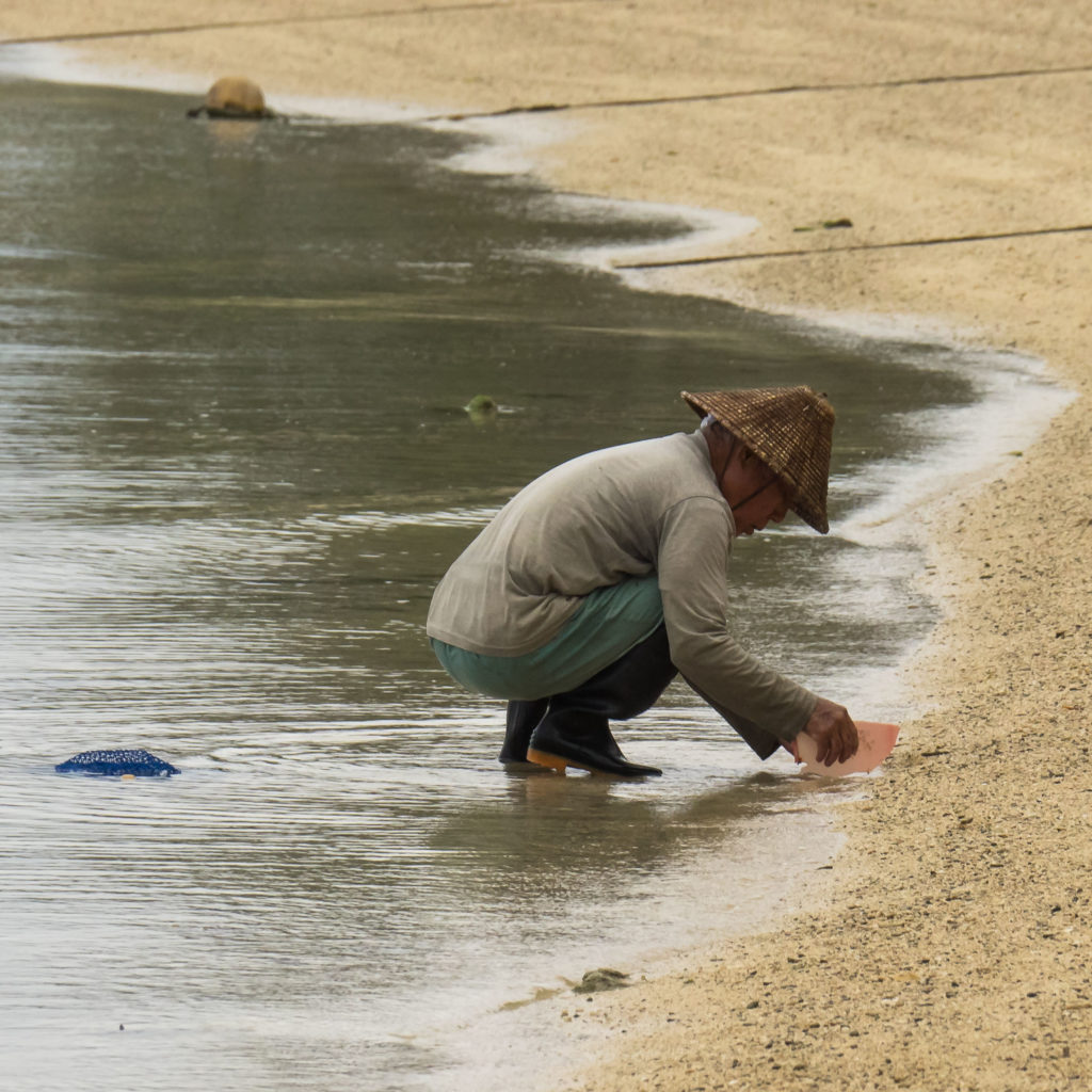 A la pêche miraculeuse (Sukuji Beach, Ishigaki)