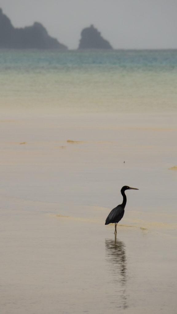 Une aigrette (Sukuji Beach, Ishigaki)